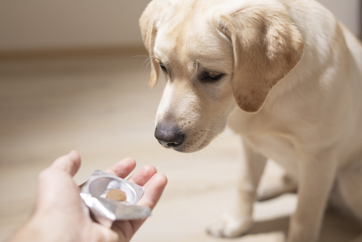 Choosing Your Pet's Pharmacy Carefully