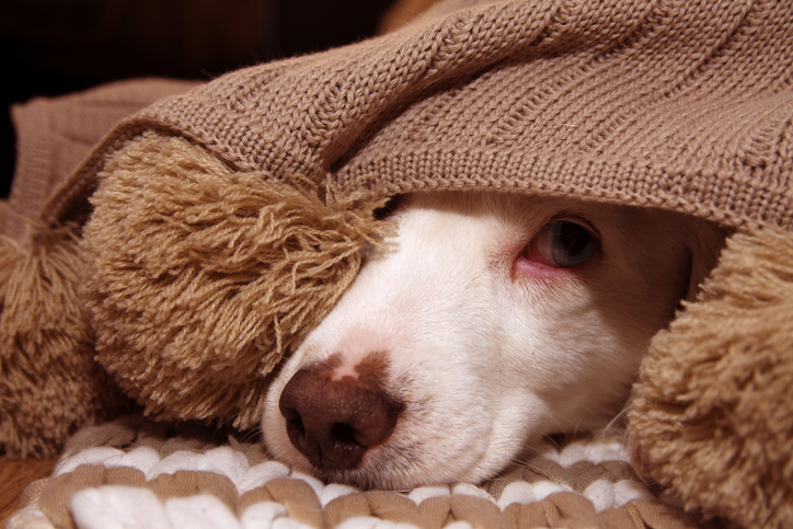 What Your Pet Wishes You Knew About Their Stress