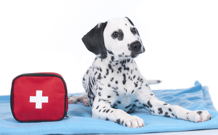 Are You Prepared for a Pet Emergency?